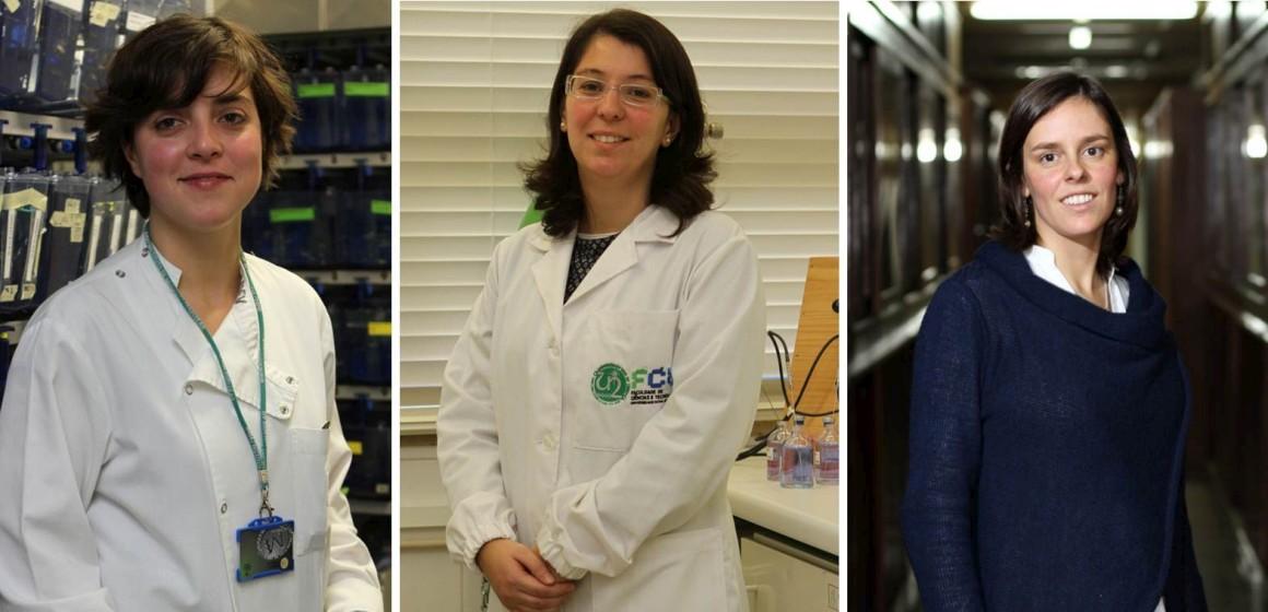 Peixe-zebra, VIH e bactéria que dá energia valem prémios a três mulheres