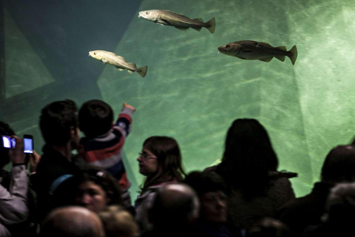 Aquário de Bacalhaus tem atraído milhares de visitantes - Público.pt